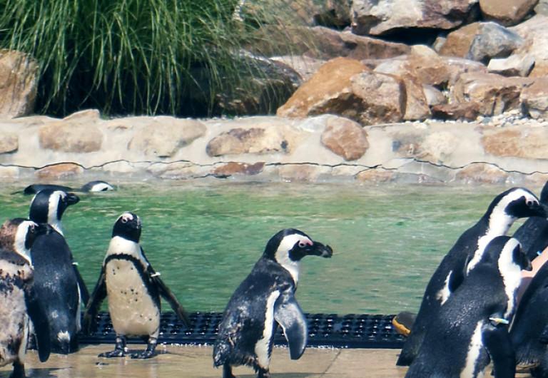 Make a Donation - Lehigh Valley Zoo