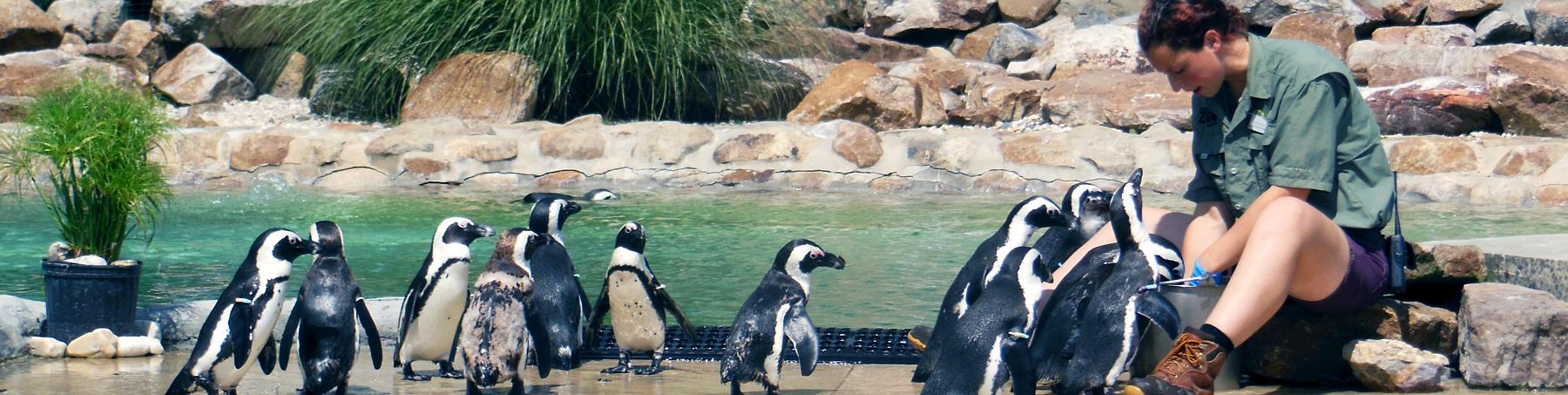 Birthday Parties Lehigh Valley Zoo
