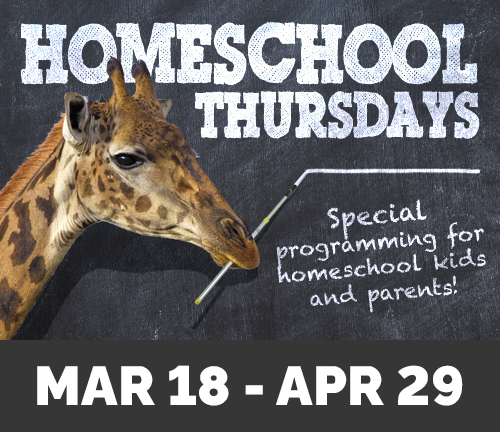 Graphic for Homeschool Thursdays from March 18 to April 29