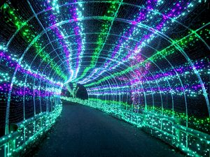 Tunnel of holiday lights over a pathway within the Zoo.