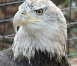 Birds of Prey in Zoological Settings